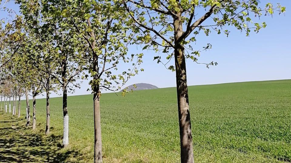Berg Říp  (Foto: Štěpánka Budková)