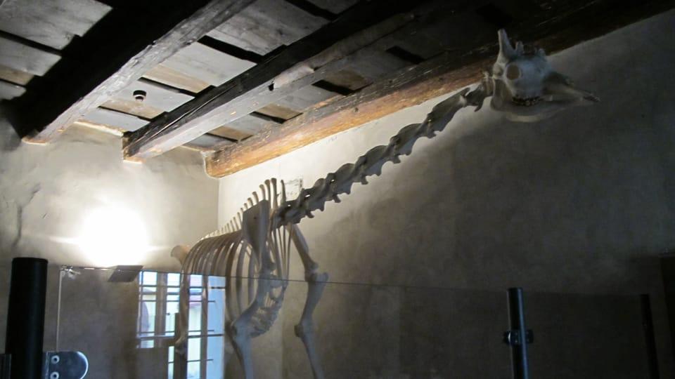 Dauerausstellung von Skeletten exotischer Tiere  (Foto: Martina Schneibergová)