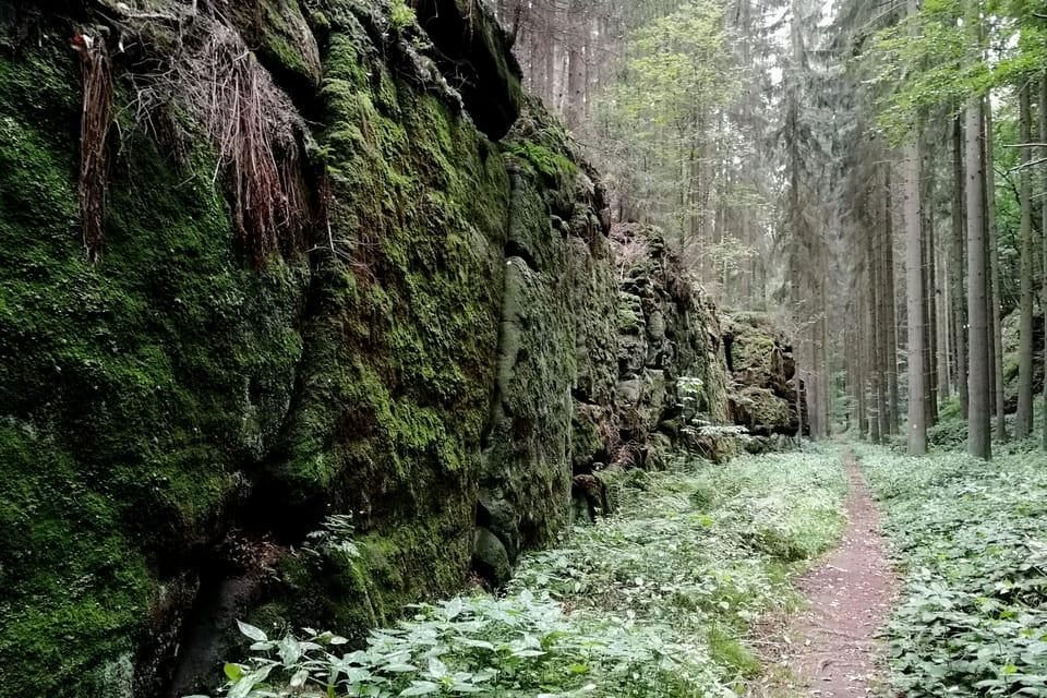 Studená rokle / Wassergrund  (Foto: Štěpánka Budková)