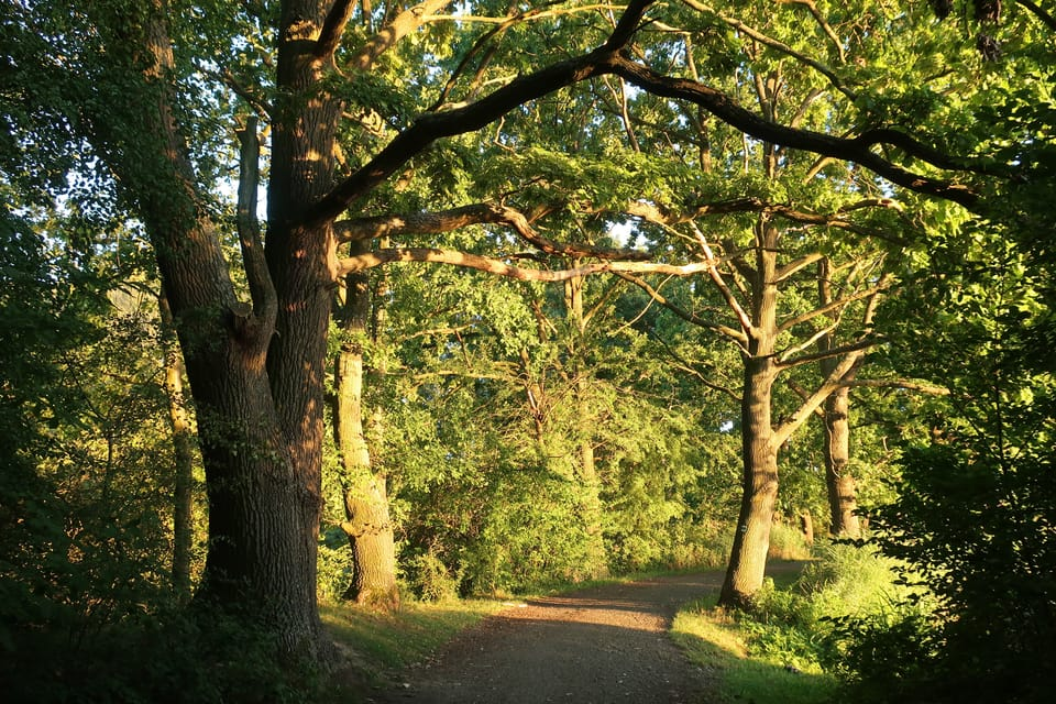 Bäume am Großhose-Teich  (Foto: Štěpánka Budková)
