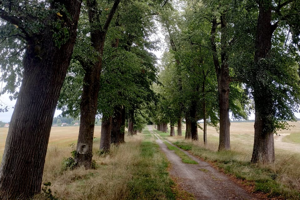 Lindenallee bei Zahrádky / Neugarten  (Foto: Bohumil Šimčík)