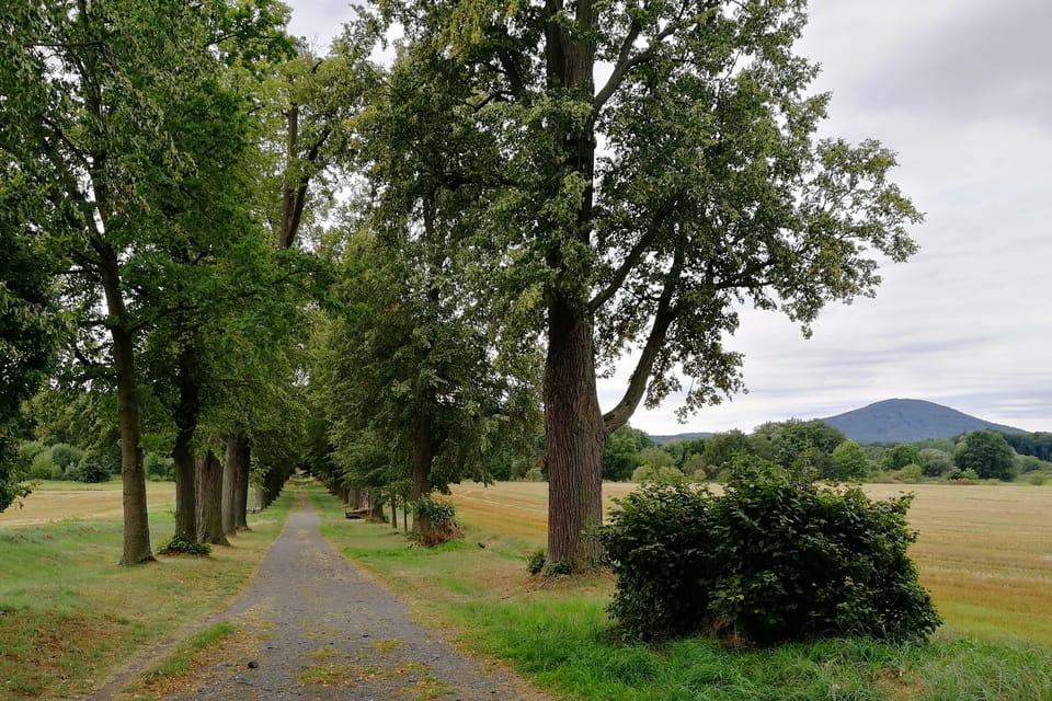 Lindenallee bei Zahrádky / Neugarten  (Foto: Štěpánka Budková)