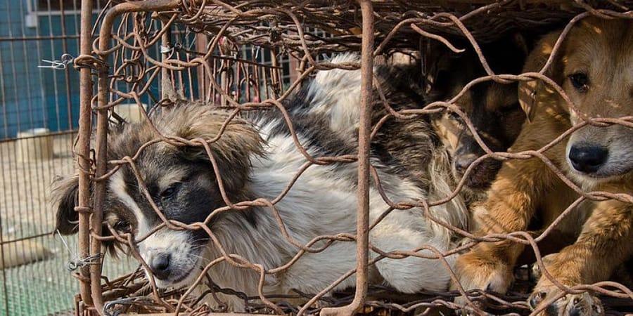 Regierung Beschliesst Mehr Tierschutz Radio Prague International